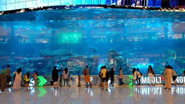 Панорама Аквариума в Дубае